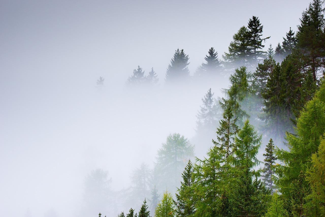 Площадь лесных пожаров в Сибири сократилась