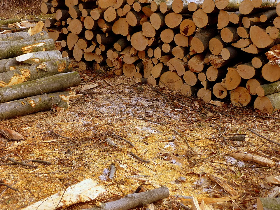 В Тарском районе пропал лес на 8 миллионов рублей