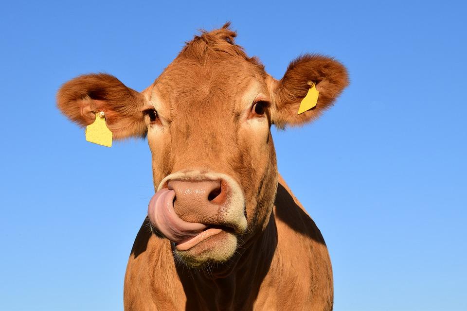 В Омске уменьшилось количество некачественной молочной продукции