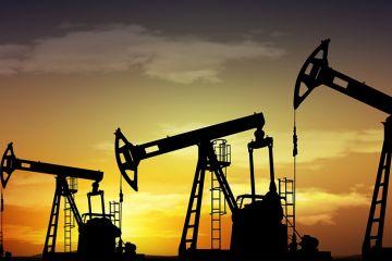 Нефть или жизнь?