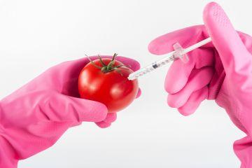 ГМО – корм для СМИ