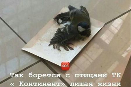 В ТЦ Континент незаконно убивают птиц