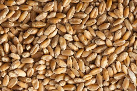 Первая партия омского зерна доставлена в Казахстан