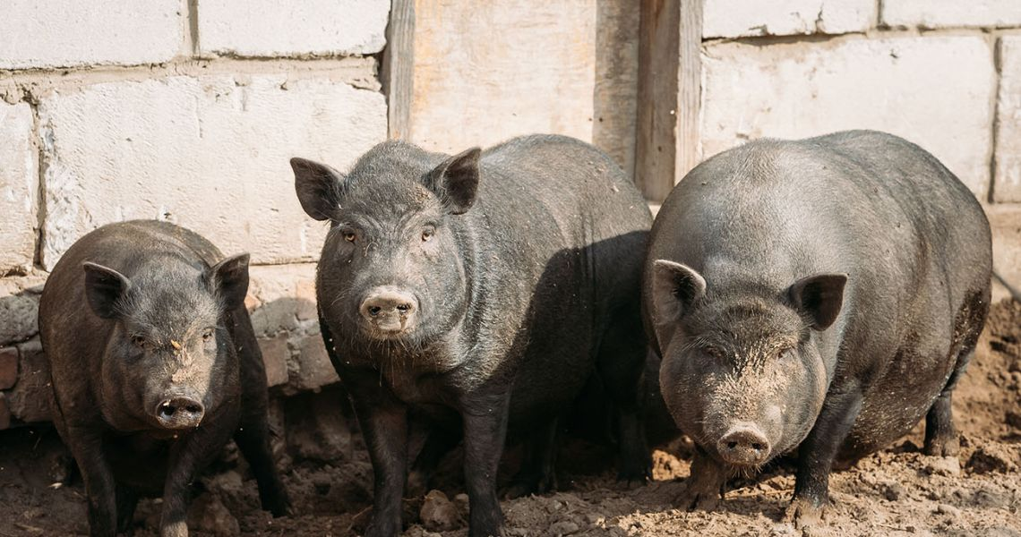 Не будь свиньей – убирай за собой
